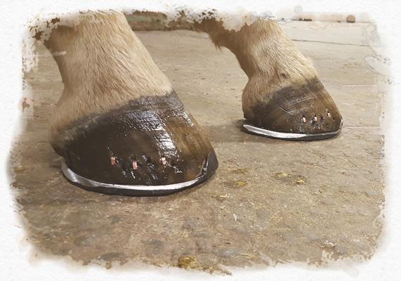 Två hästhovar med hästskor
